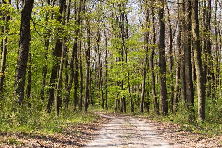 Csendes, meditatív séták az erdőben