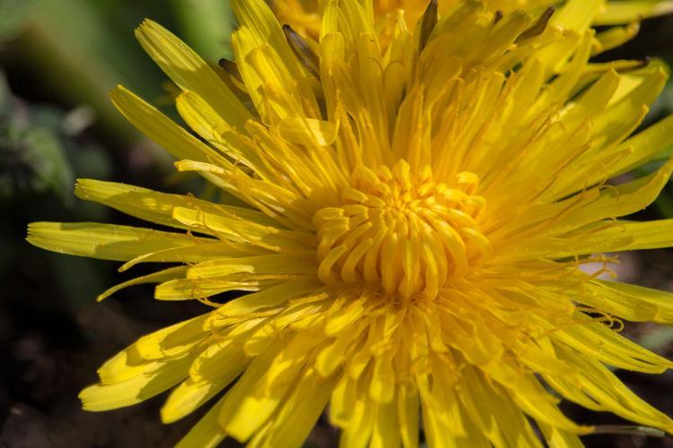Fitoterápia, gyógynövények használata